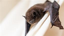 Windows Act as 'Blind Spots' to Bats