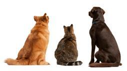 Tail Language: Want to Know What Your Pet Is Thinking?