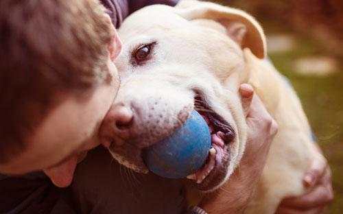 amante de perros