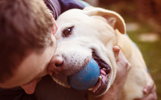 강아지랑 공놀이 하는 남자