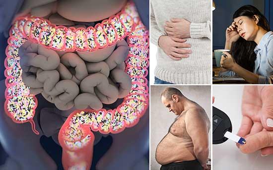 미생물은 수많은 방법으로 건강에 영향을 미칩니다