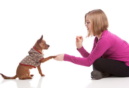 Enséñale a Tu Perro Nuevos Trucos y Habilidades