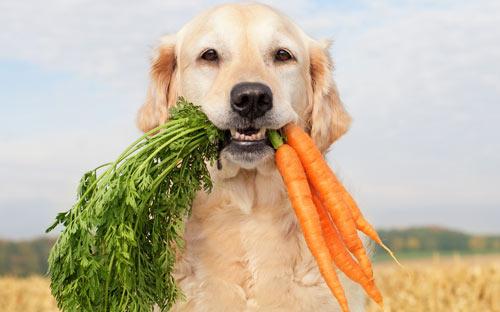 Perro y Zanahorias