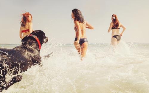 playa con tu perro