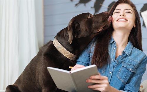 presupuesto con tu perro