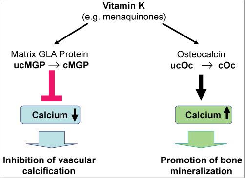 Efectos de Vitamina K