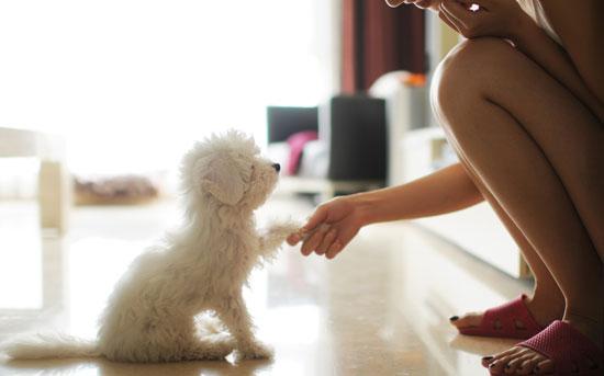 강아지를 훈련시키는  여자