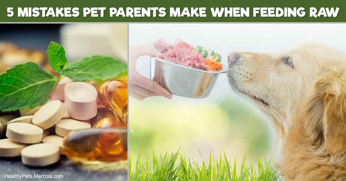 Cat Eats Half Dog Food Half Cat Food