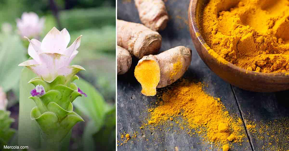 how to grow turmeric plant