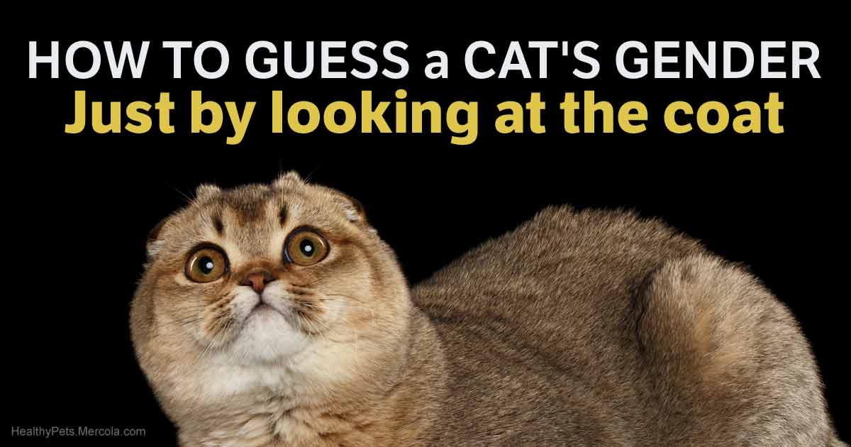 How To Tell A Cat Kitten S Gender Easily