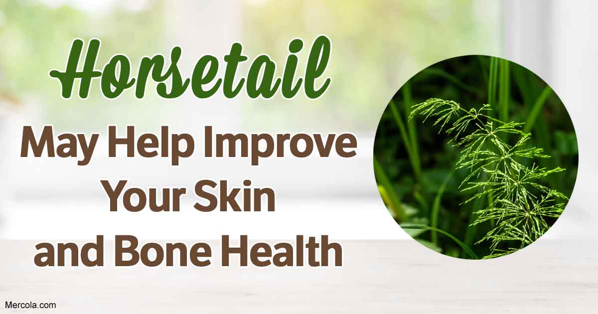 What Are The Benefits And Uses Of Horsetail