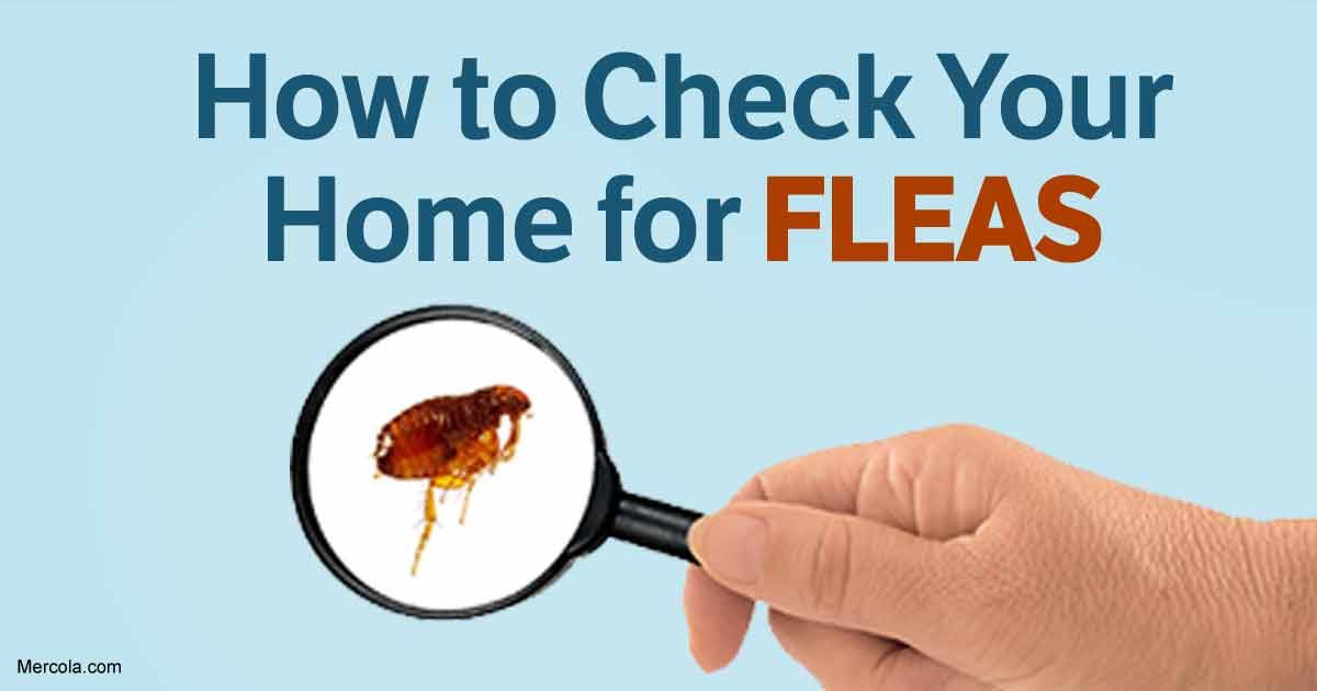 How To Get Rid Of Fleas Naturally