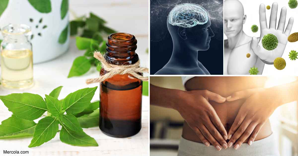 Let Sweet Basil Oil Boost Your Health Today