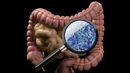 Gut Bacteria a Key to Health