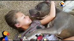 Little Girl Loves Her Pitbull Pup