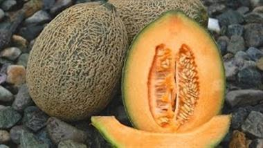 Growing Guide for Melons