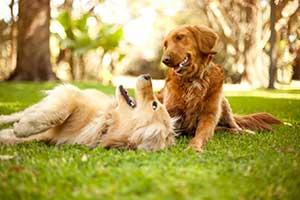강아지 놀이