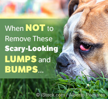 Dog Lumps and Bumps
