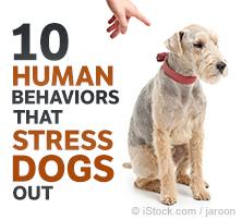 Dog Tress