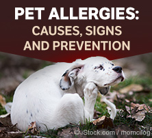 Pet Seasonal Allergies