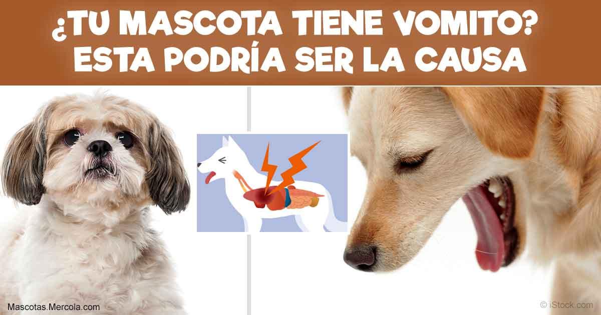 Mascotas en Riesgo de Estenosis Pilórica