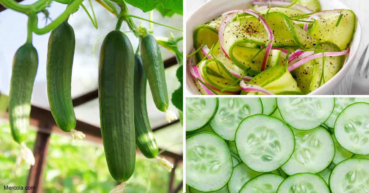growing cucumber how to grow cucumber in your garden