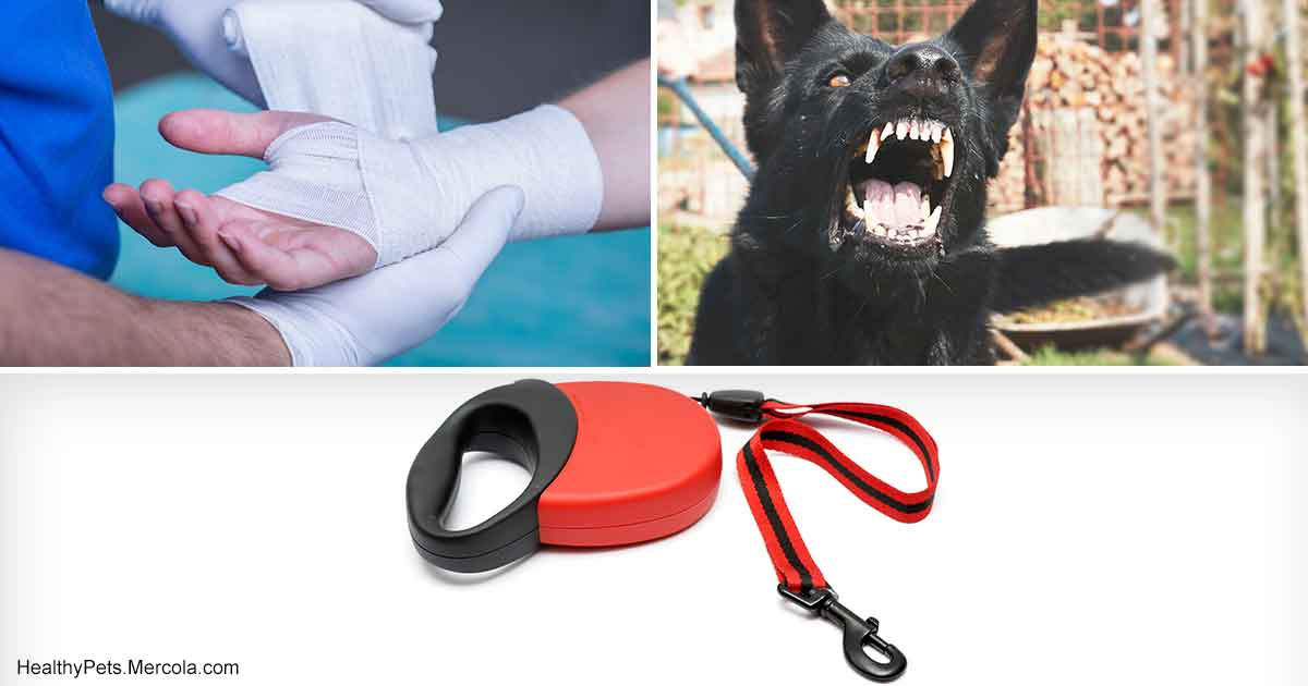 Dr Becker Reasons Not To Use A Retractable Leash - 28 times letting your dog play in the mud wasnt a good idea
