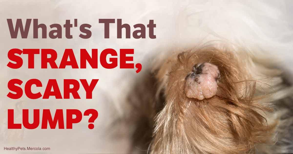Benign Dog Lumps and Dog Warts