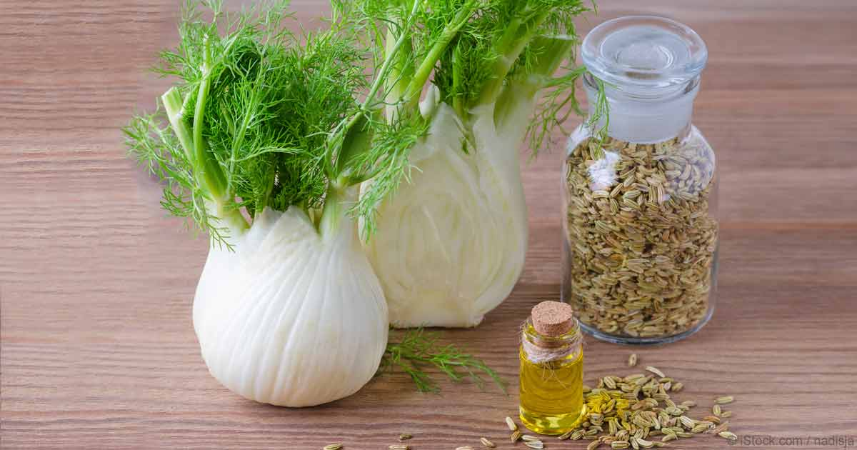 Herbal Oil: Sweet Fennel Oil Benefits and Uses