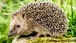 All About Hedgehogs: Seven Facts About These Adorable Animals