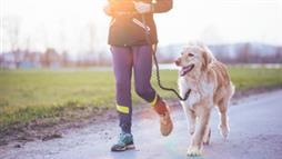 running with your dog benefits