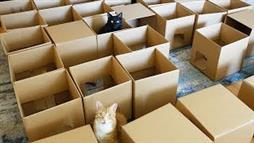 Entertain Your Cats With a 50-Box Maze