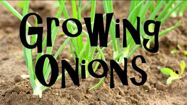 How to Grow Onions at Home