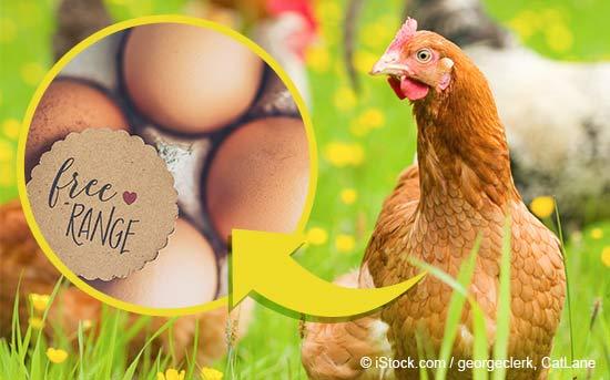 自由放养的养鸡场产出的有机鸡蛋