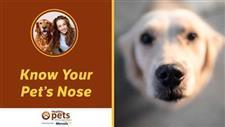 Your Pet's Nose Is a Barometer of Health (Don't Fall for This Myth)