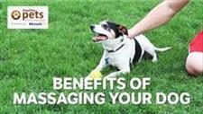 Does Your Dog Need a Massage?