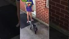 Baby Goat Copies Little Girl