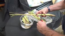 Great Tips to Grow Lemongrass