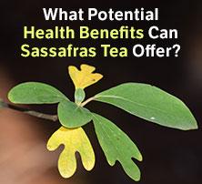 Sassafras Tea