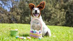 easter pet hazards