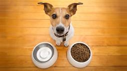 euthanasia meds in pet foods