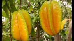 What Are the Benefits of Star Fruit?