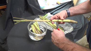 Tips on How to Grow Lemongrass