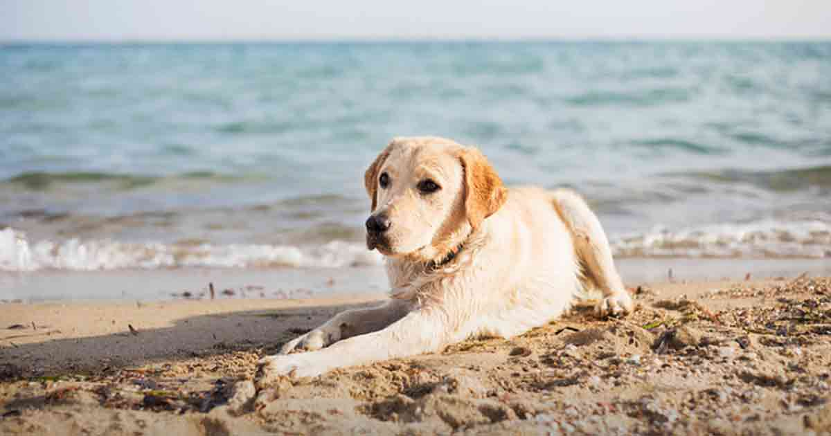 Saltwater: A Hidden Risk to Your Dog at the Beach