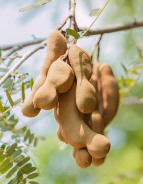 What Is Tamarind Good For