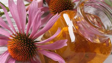 Echinacea: The All-American Flower