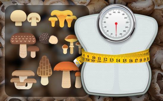 O cogumelo ajuda na redução da obesidade