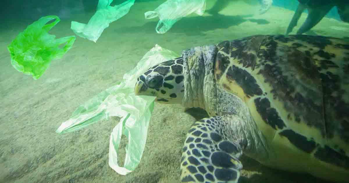 Sea Turtles Are Ingesting Microplastics