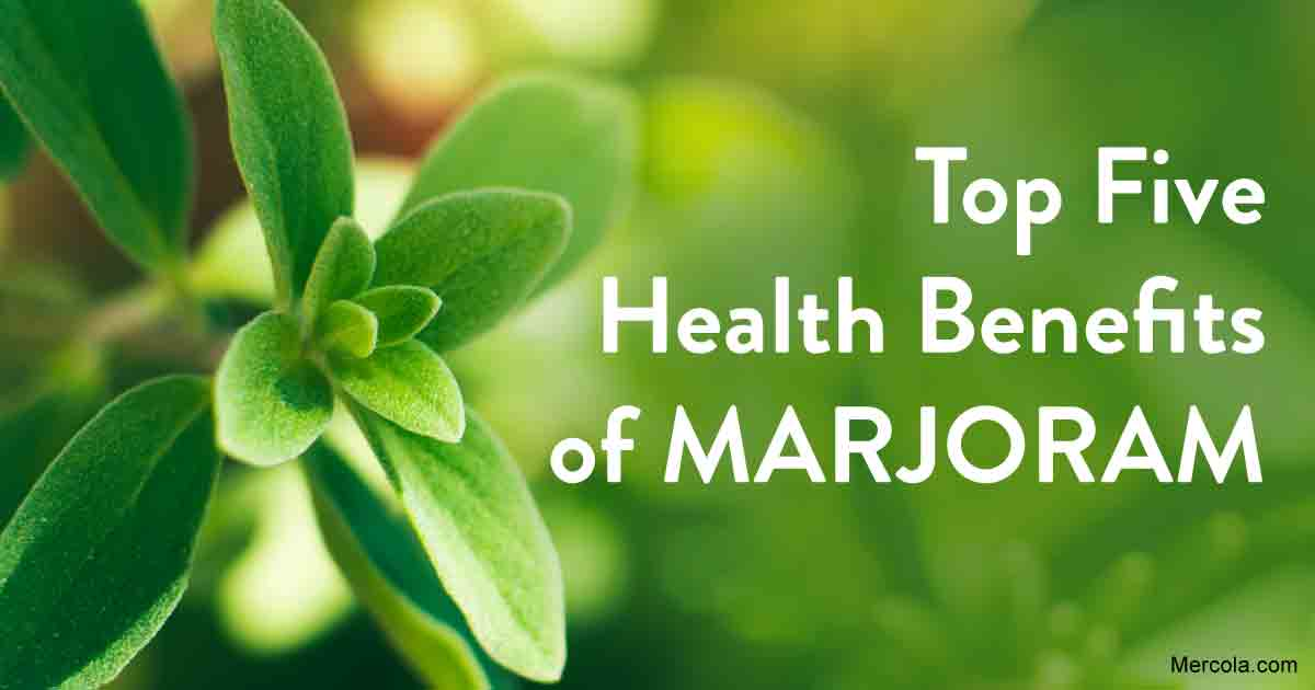 Health Benefits of Marjoram