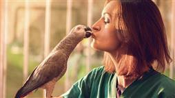 Parrots Are Smart, and Most Outlive Their Owners